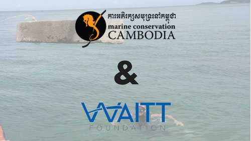 Volunteer Internship in Marine Conservation and Research