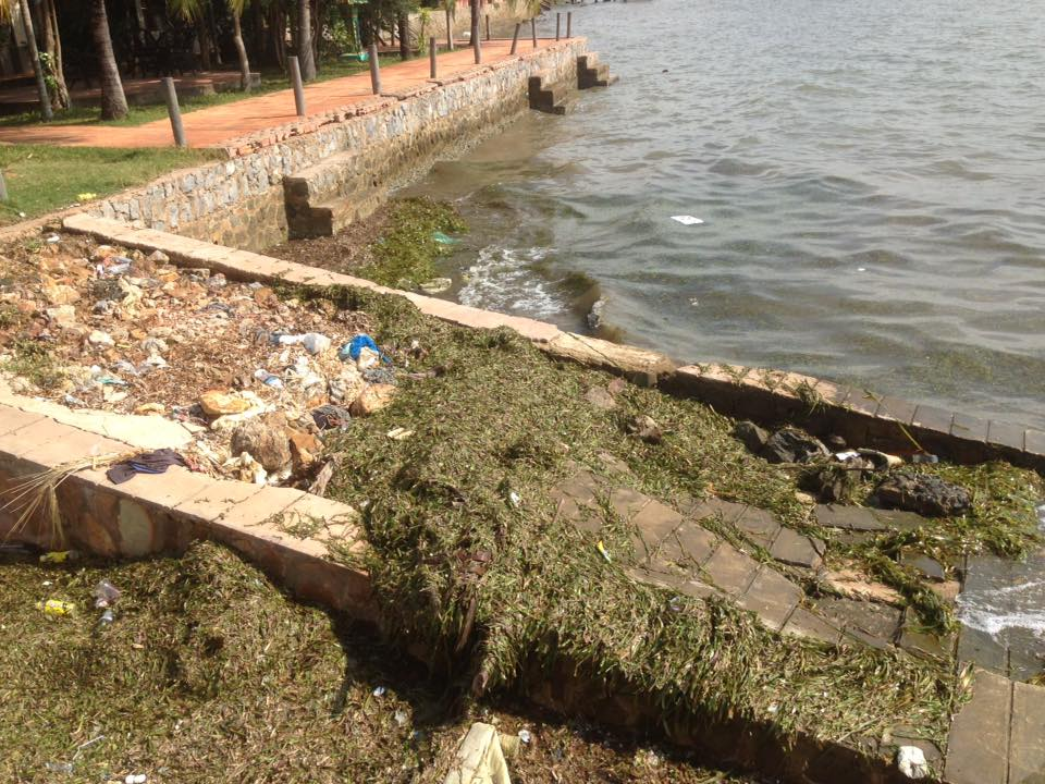 Seagrass Destroyed by Trawlers